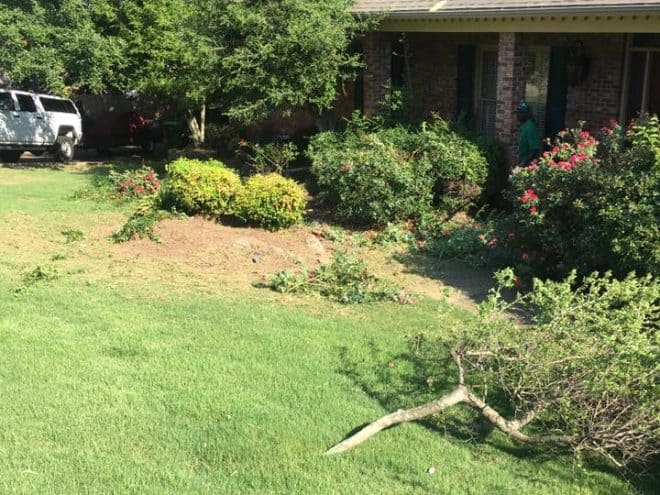 Lawn care clean-up in Little Rock Before Photo