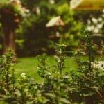 Reinvigorate Your Backyard: How To Landscape Your Backyard