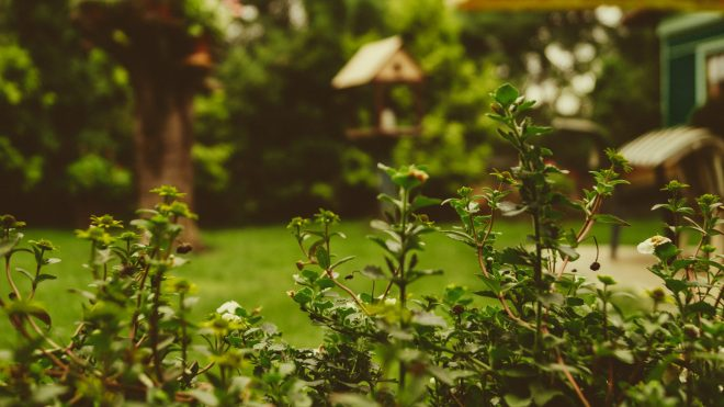 Reinvigorate Your Backyard: How To Landscape Your Backyard