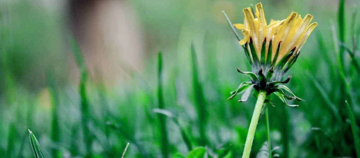 Spring Lawn Care 101: The Basics